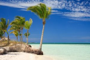 A Caribbean beach with palm trees